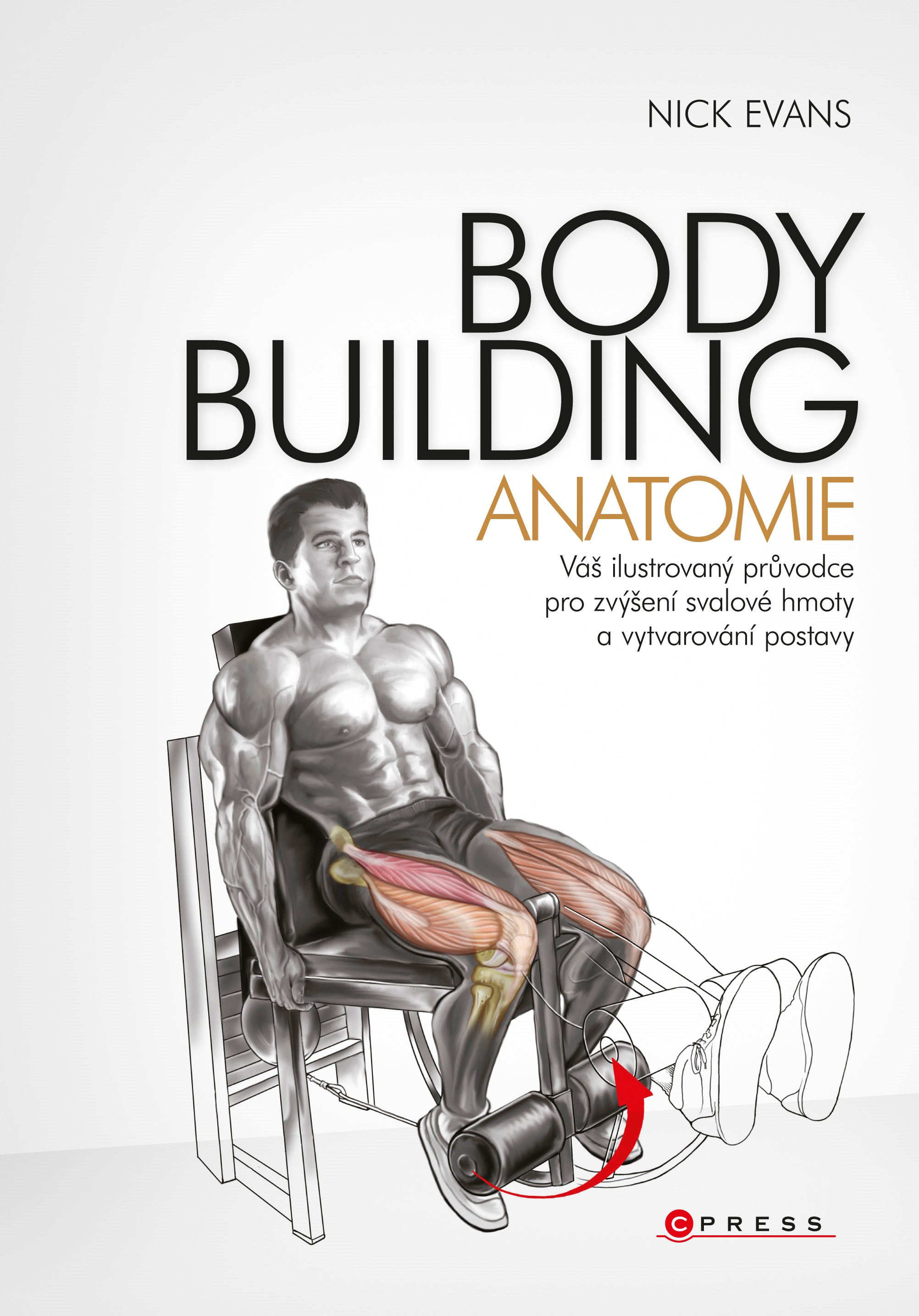 Bodybuilding Anatomie Albatrosmedia