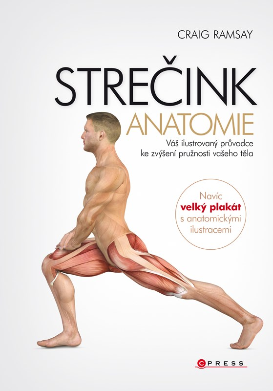 Strečink - anatomie | Craig Ramsay