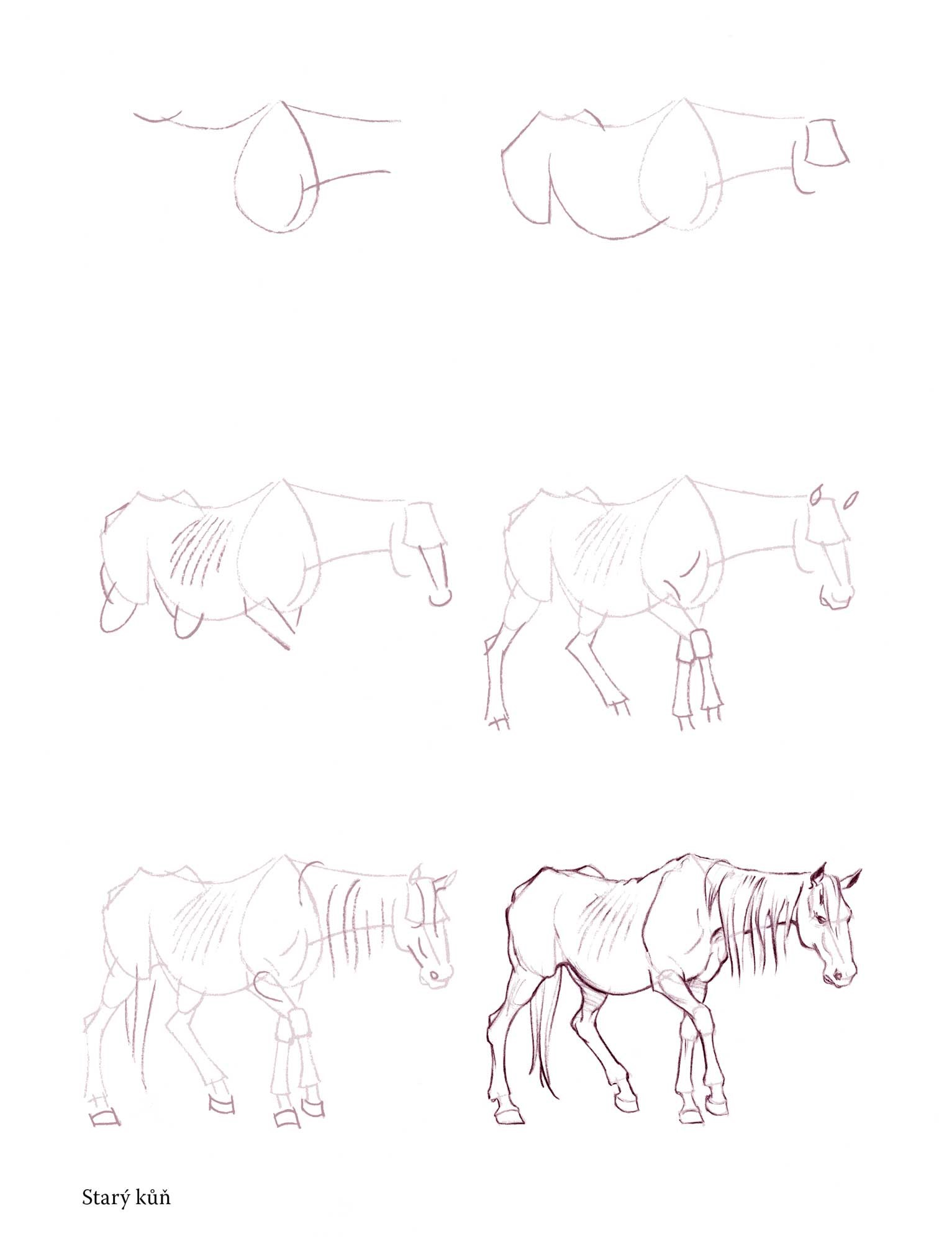 Nakresli 50 Koni Albatrosmedia Cz