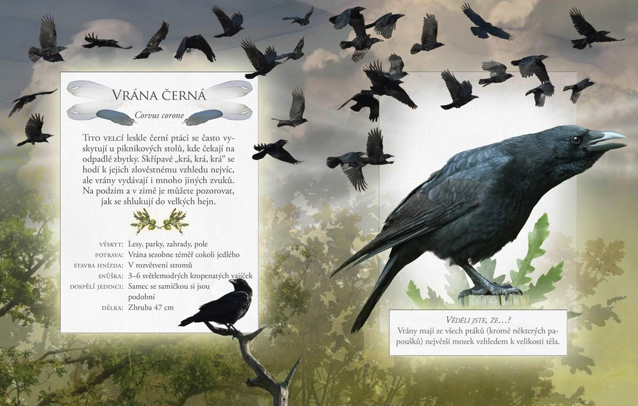 Hledejte obrázky na téma Pták Logo.
